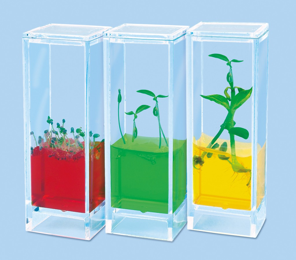 See it grow plant lab - Science