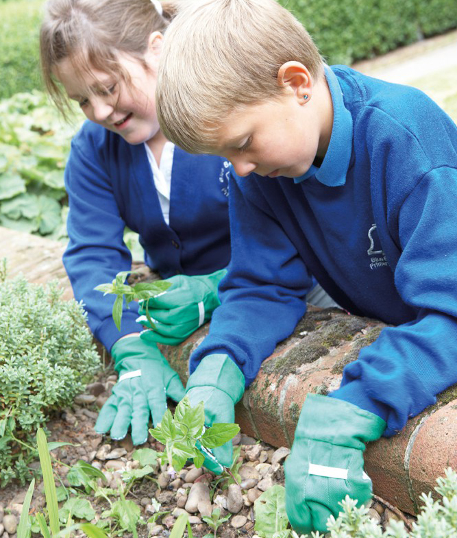 School gardening for science outdoors
