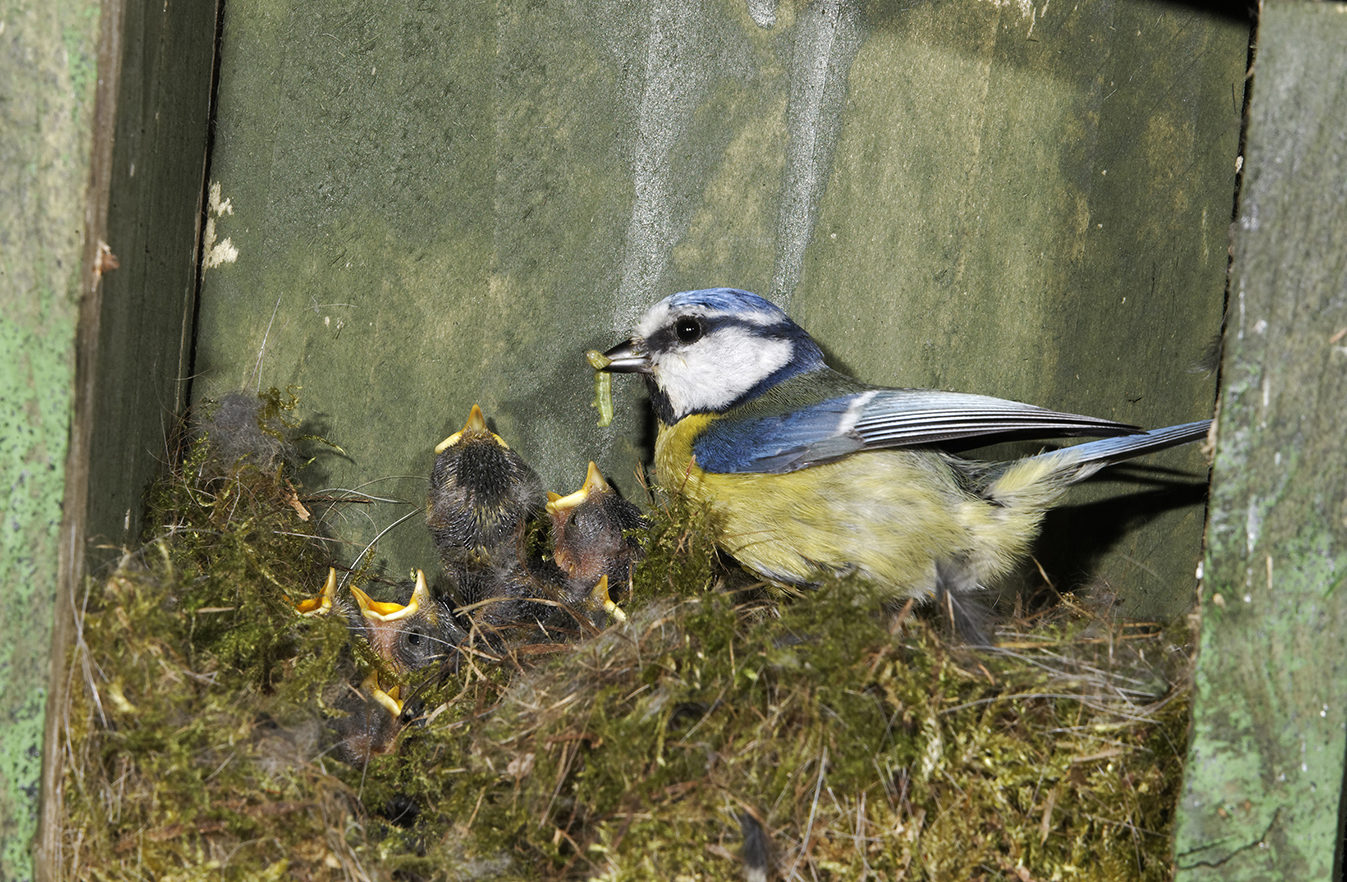5 Birdwatching Tips To Give Nature A Home In Your School