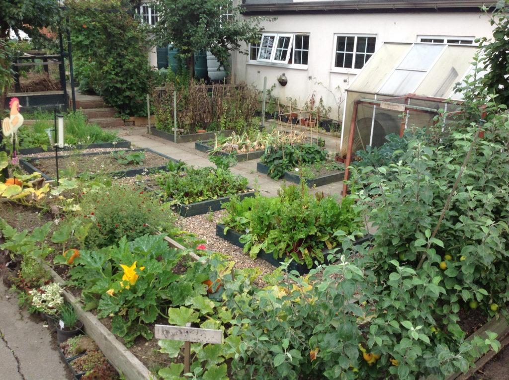 school garden veg
